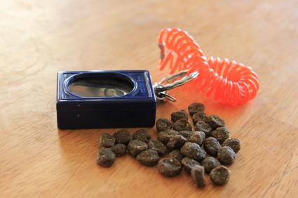 Clicker with treats