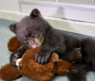 Aldo the Black Bear