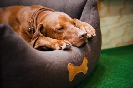 Dog sleeping in dog bed.