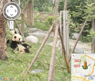 Now you can see images from zoos around the world on Google's Street View.