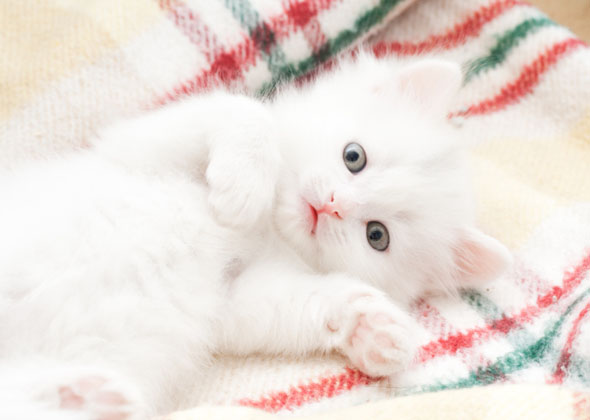 the most trendy cat names of 2015