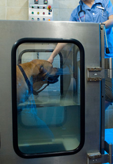 Dog on Underwater Treadmill