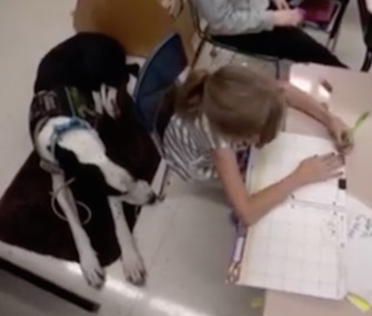 Bella gets around with help from her Great Dane service dog, George.