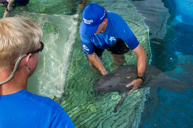 Manatee Release