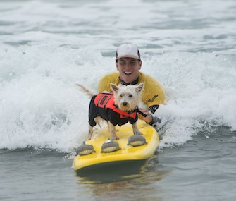 Fifty dogs took the waves in southern California Sunday for a Surf Dog Competition.