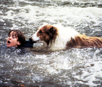 Lassie Saves Timmy