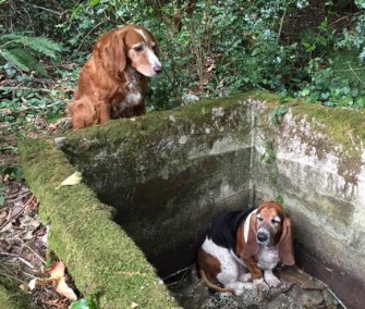 Tillie, a setter, stuck by her friend Phoebe's side when she got trapped in an old cistern.