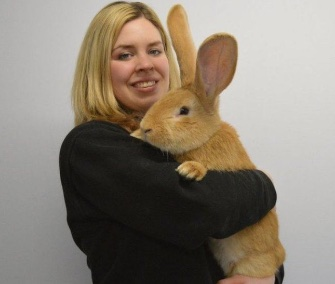 Atlas, a continental giant rabbit, is only 7 months old and has more growing to do.
