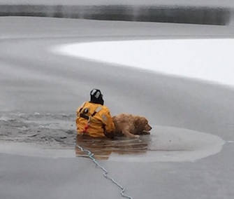 A firefighter nicknamed Dr. Doolittle rescued a dog who'd fallen into an icy lake in Maine Wednesday.