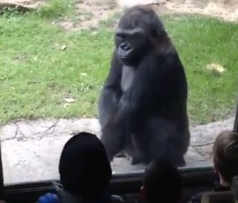 The Dallas Zoo's gorilla gave his young visitors a taste of their own medicine.
