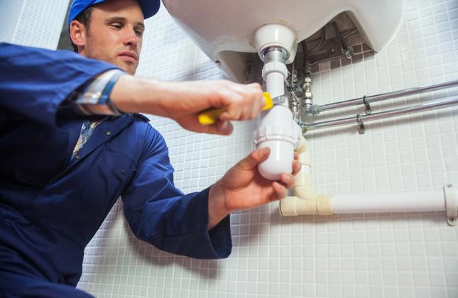 Dog hates plumber