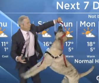 Canadian weatherman Mike Sobel's report was upstaged by Ripple, a playful shelter dog who joined him on the set last week.