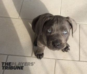 Derek Jeter's puppy Kane is about 10 weeks old in this picture.